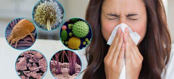 Аллергия на домашнюю пыль лечение