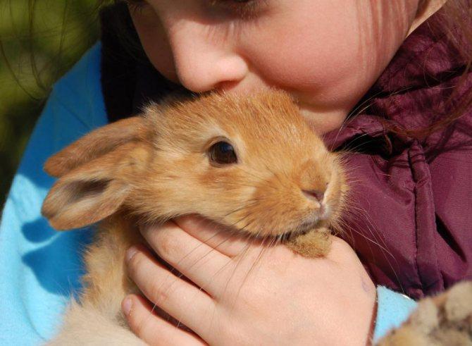 Аллергия на кролика у детей