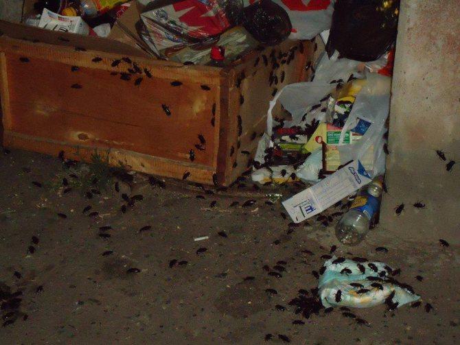 Аллергия на средство от тараканов