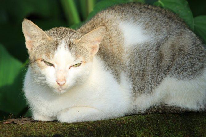 Аллергия у грудничков на кошек - причины, симптомы, лечение