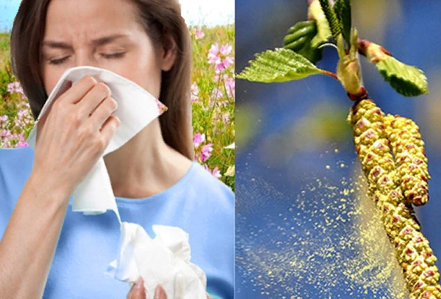 аллергия в апреле на пыльцу березы