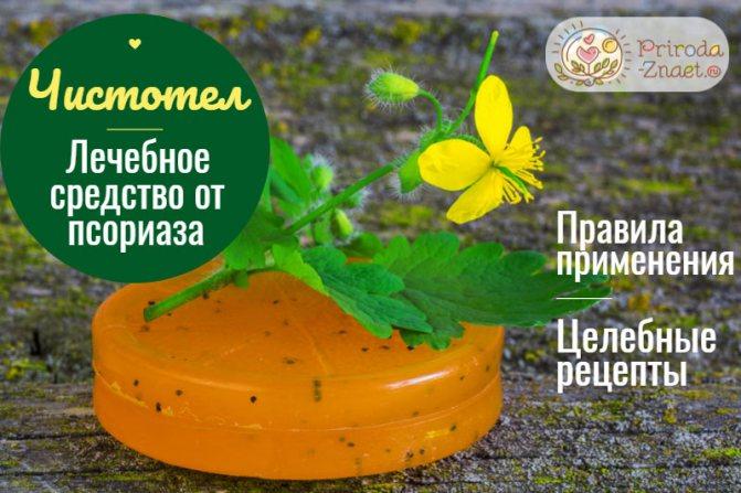 Чистотел – эффективное и доступное средство для борьбы с псориазом