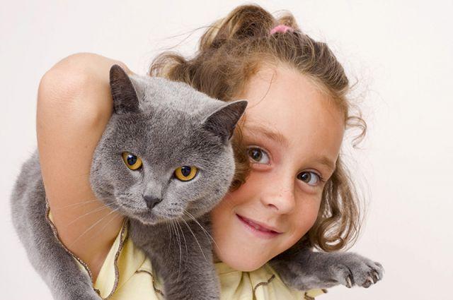 Если есть аллергия на кошек будет ли собак