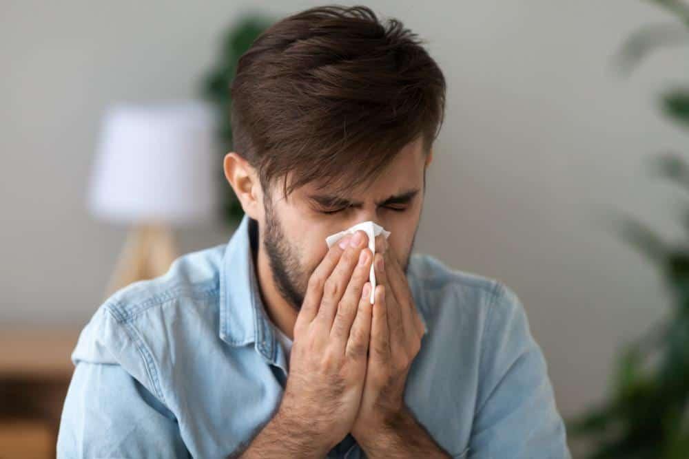 Герань вызывает кашель или аллергию