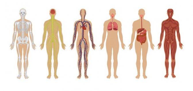 Герпес поражает целые системы органов человека, если его не лечить