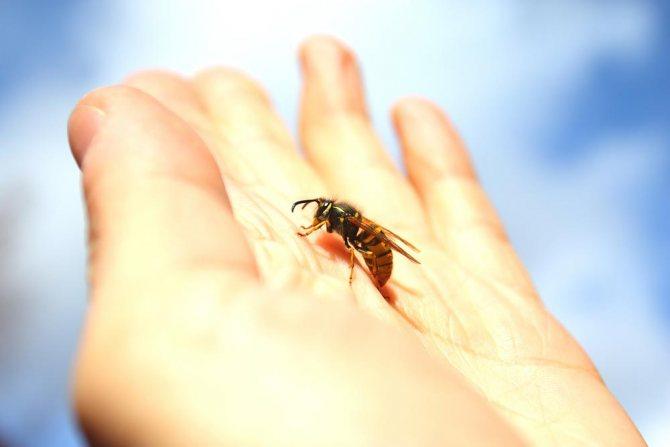 Как избежать укусов пчел и ос?