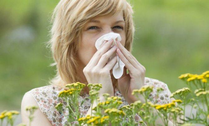 как проявляется аллергия на герань
