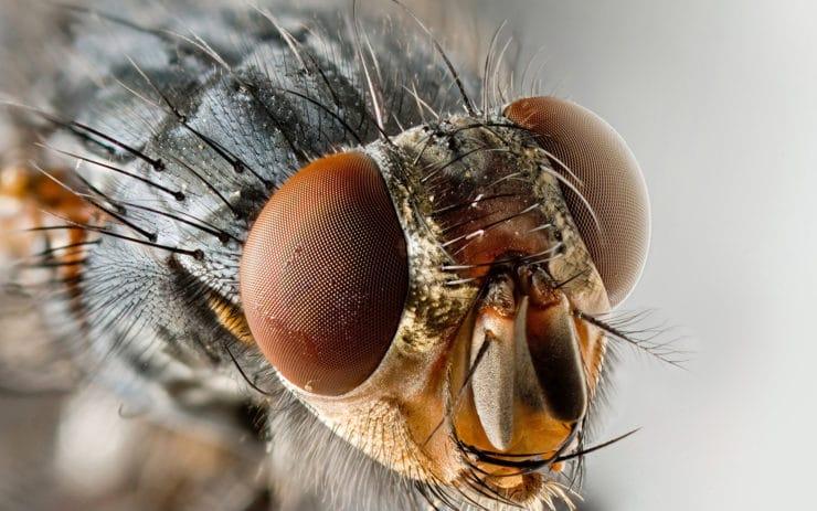 Как выглядит муха вблизи