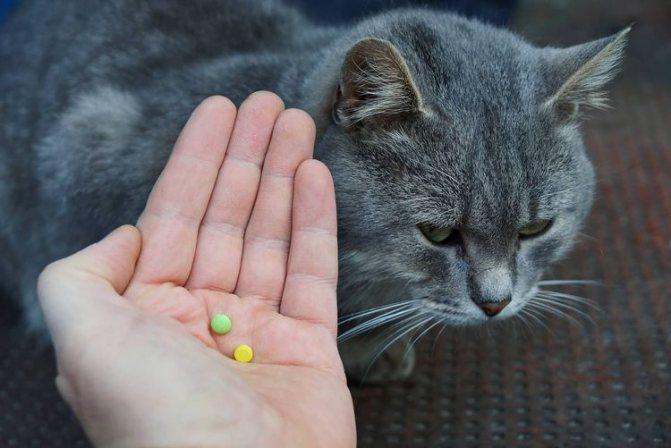 Кошка с таблетками