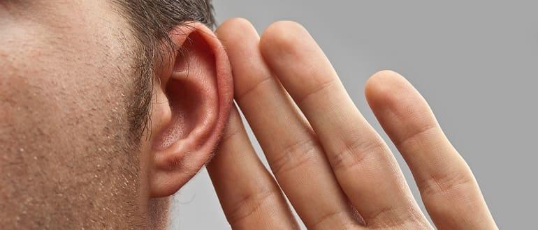 Наружный отит собак и кошек Дерматит, дерматоз слухового прохода