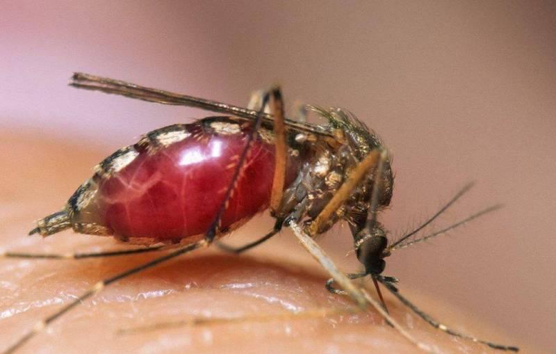 Почему укус комара вызывает опухоль и покраснение