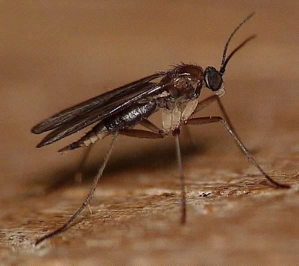 Противоаллергические препараты от укусов насекомых