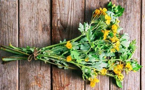 Пучок травы с жёлтыми цветами
