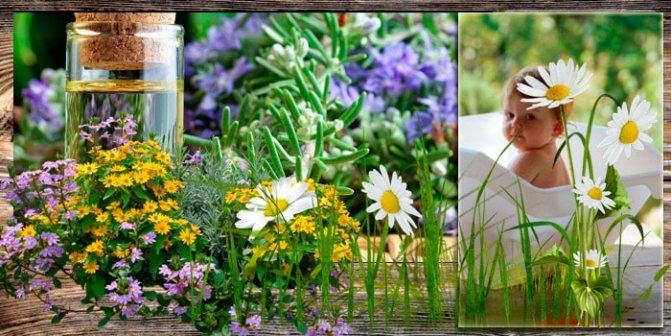 Сбор трав для детской фитованны