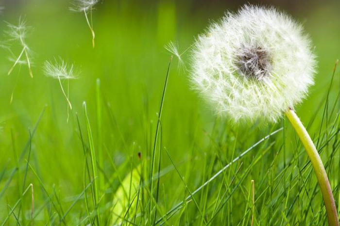 супрастин при грудном вскармливании от аллергии
